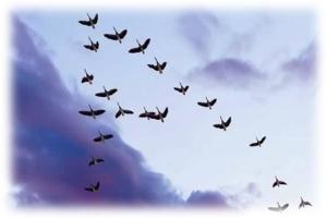 vuelo-de-gansoss